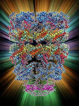 Chaperonin Protein Complex by Laguna Design