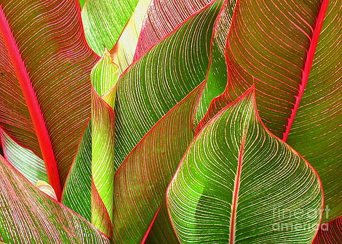 Colorful Leaves by Ranjini Kandasamy