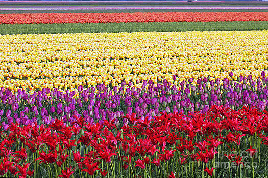 Colors of Holland by Lars Ruecker