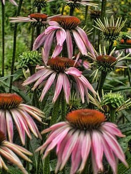 Cone Flowers by Jes Fritze