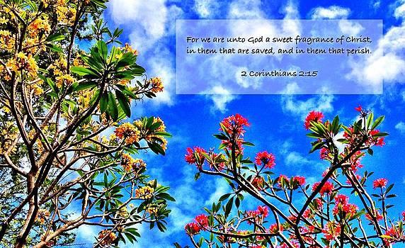 2 Corinthians 2 15 by Scripture Pictures