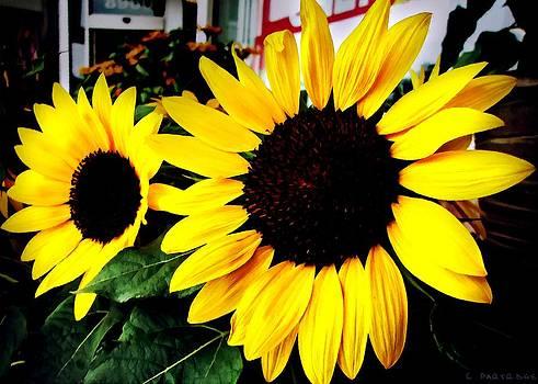 Robert Partridge - Curbside Sunflowers