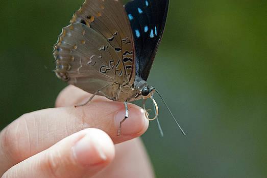 Tam Ryan - Curious Butterfly