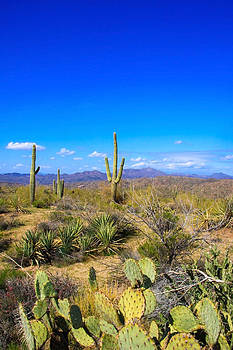 Desert View by Dawn Richards