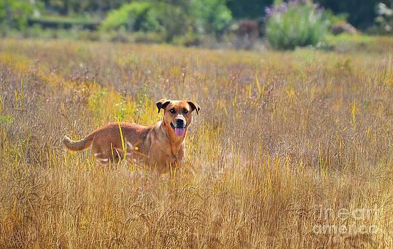 Dog free by Paulo Sezio De Carvalho