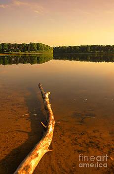 Svetlana Sewell - Drift Wood