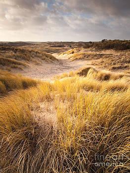 Dune Landscape in Winter Sun by David Hanlon