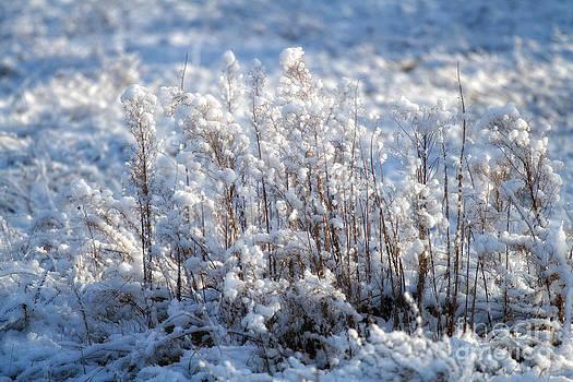 Early Winter in Poland by Monika Wisniewska