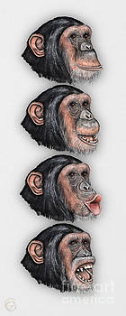 Facial Expressions of Chimpanzees Pan troglodytes - Zoo - Mimik Schimpansen - Stock illustration by Urft Valley Art