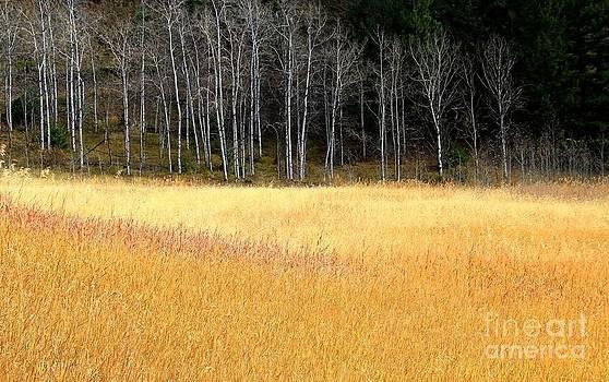 Roland Stanke - Fall Grasses
