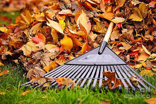 Elena Elisseeva - Fall leaves with rake
