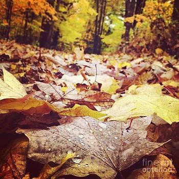 Rachel Barrett - Fallen Leaves