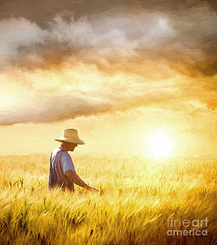 Sandra Cunningham - Farmer checking his crop of wheat/ digital painting