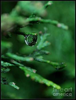 Feel  the  rain  by Marija Djedovic