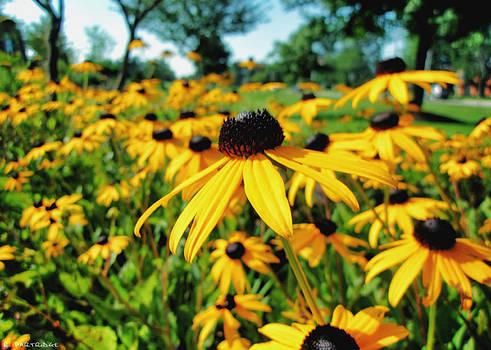 Robert Partridge - Field Of Sunshine