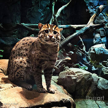 Nancy Stein - Fishing Cat
