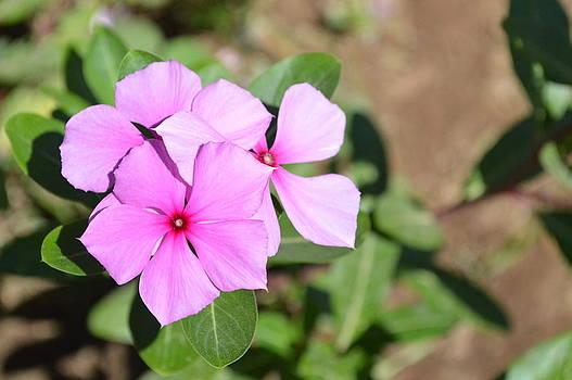 Flower by Najlae SATTE