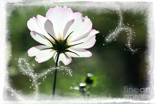 Sophie Vigneault - Flower