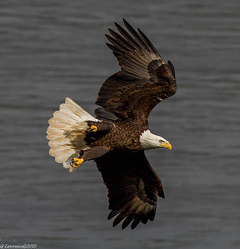 Fly By  by Glenn Lawrence
