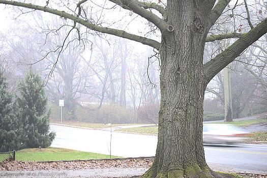 Fog 2 by Stacie  Goodloe