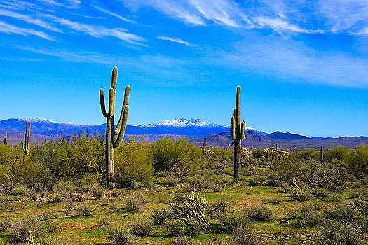 Four Peaks with Snow by Dawn Richards
