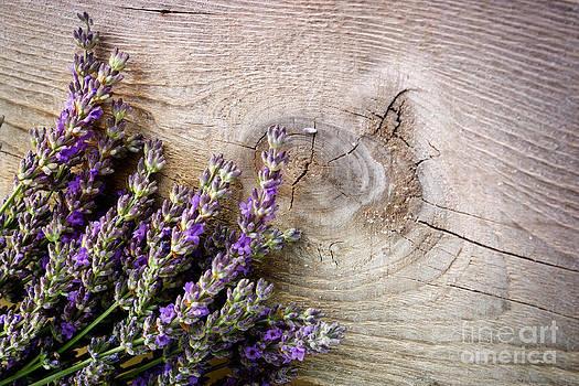 Mythja  Photography - Fresh lavender