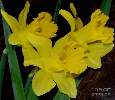 Gail Matthews - Frill of the Daffodil