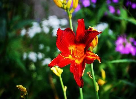 Gary Wonning - Garden Beauty