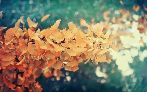 Ginko by Victoria  Kostova