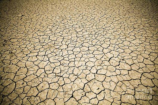 Tim Hester - Global Warming
