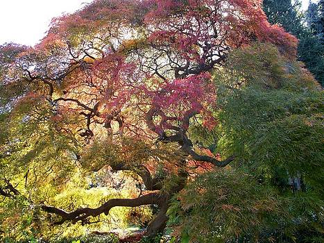 Glorious tree in the Arboretum by Rick Todaro