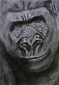 Gorilla Portrait by David Hawkes
