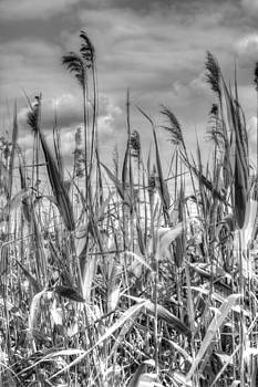 Stephen Barrie - Grasses in Motion