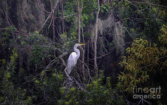 Dale Powell - Lowcountry Marsh White Heron