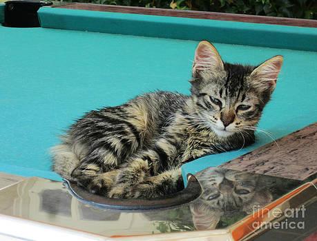 Greec Kitten by Sara  Meijer