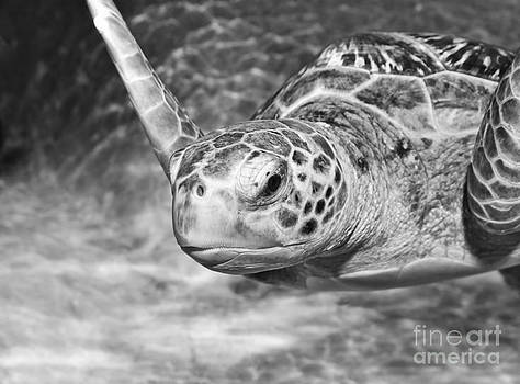 Jamie Pham - Green sea turtle.