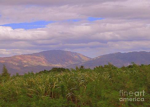 Haiti  by Tracey Hampton