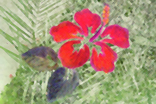 Hand drawn Hibiscus Color Pencil by William Braddock