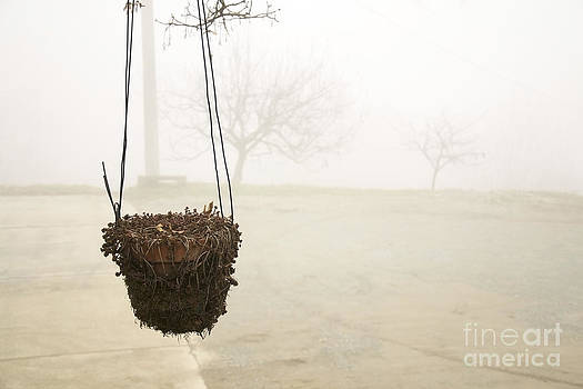 Hanging Pot by Stefano Piccini