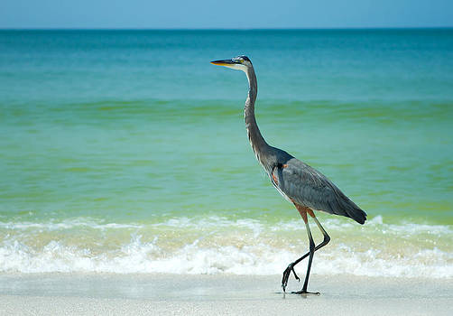 Fizzy Image - heron on a sunny beach in florida