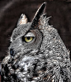 Horned Owl by Janet Maloy