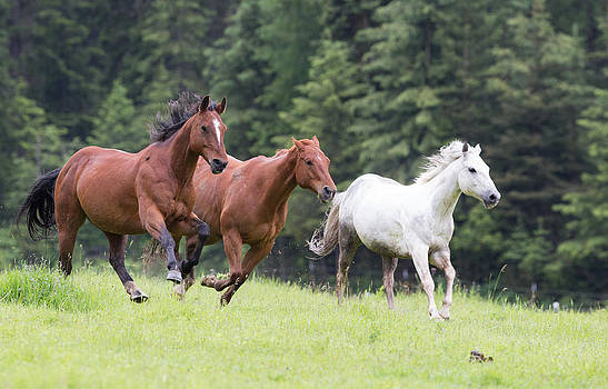 Dee Carpenter - Horses