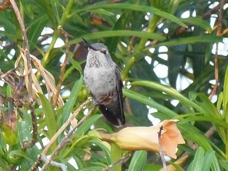 Humming Bird by Davon Duncan