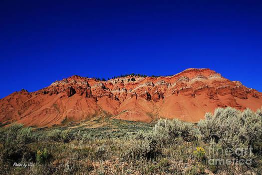 Jackson Hole Wyoming by Jinx Farmer