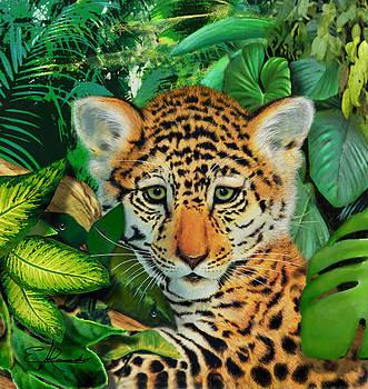 Jaguar Cub by Edwin Rosado