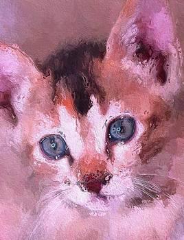 Steve K - Kitten