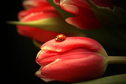 Ladybug and Tulip by Linda Fowler