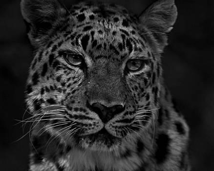 Erin Tucker - Leopard