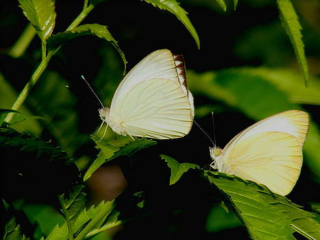 2 Little Butterflies by Rebecca Flaig