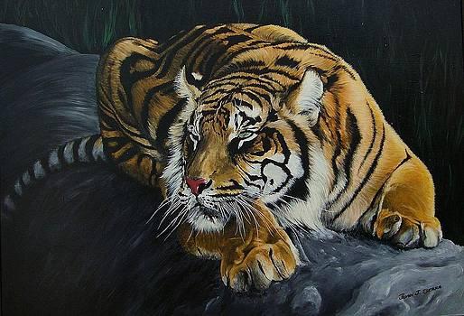 Lord of the jungle by Juan Jose Serra